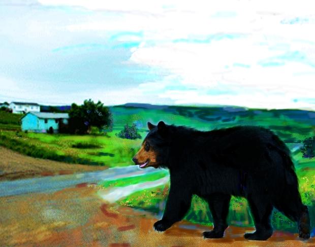 Bear wandering, Eskasoni by Joanne Doucette, 2015. For Bernadette.