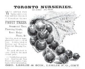 Advertisement from the Canadian Horticulturalist.