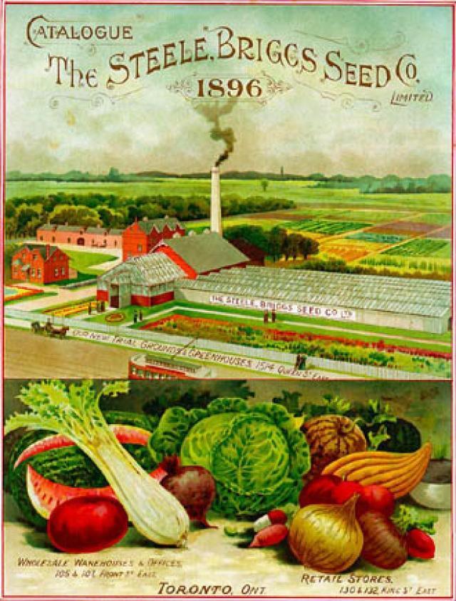 Steele Briggs catalogue, 1896.