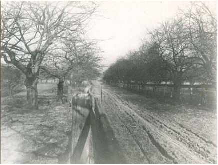 Woodfield Rd, looking north from Queen, 1906