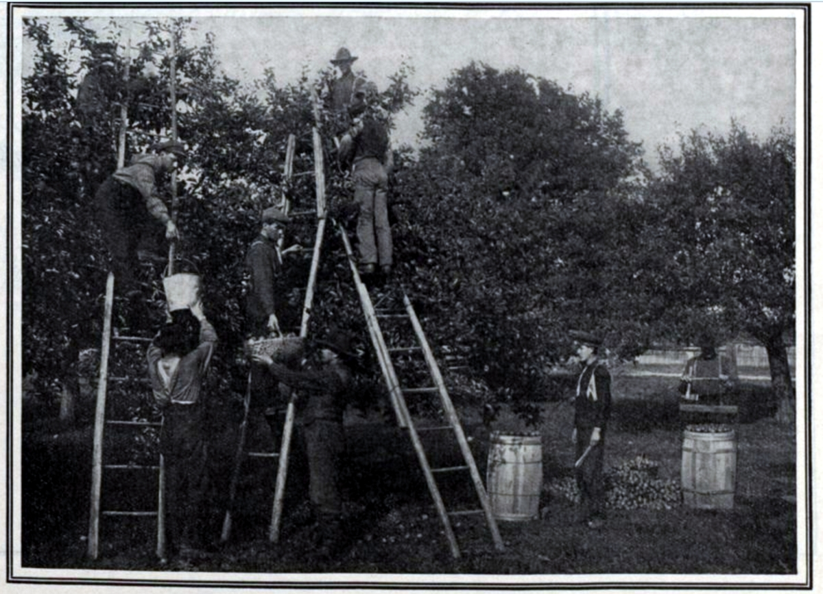 19070928 CDNCOUR Apple pickers