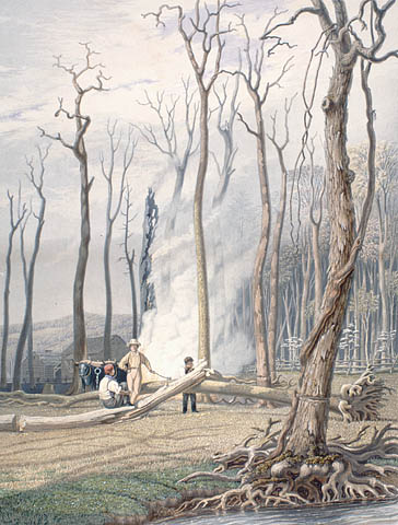 Burning Trees in a Girdled Clearing, Archives and Libraries Canada