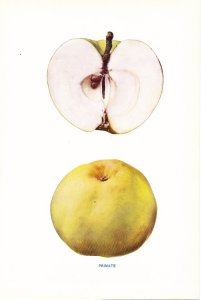 Primate apple
