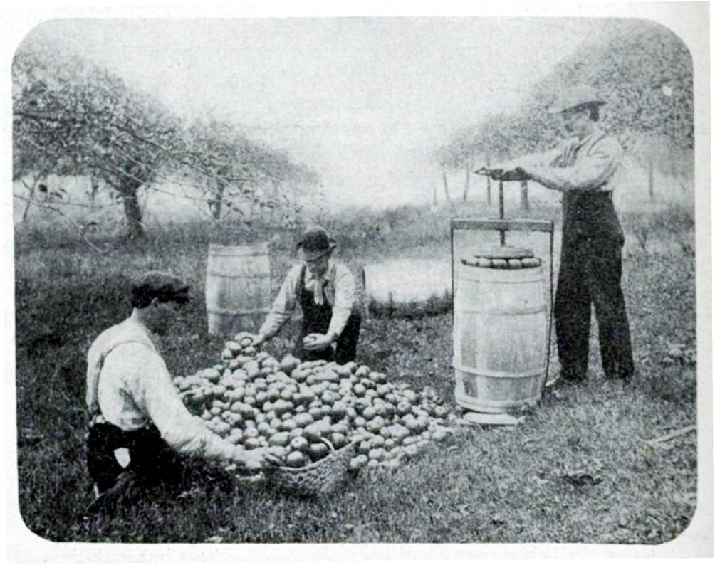 Sorting and packing apples