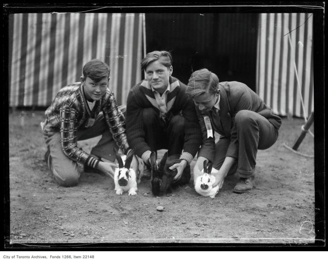 Broadview Boys' [Fall] Fair, group of boys with rabbits : Stan Hollywood, 90 Chatham, Kingston Beamish, 128 Chatham, Joe Edwards, 400 Pape.