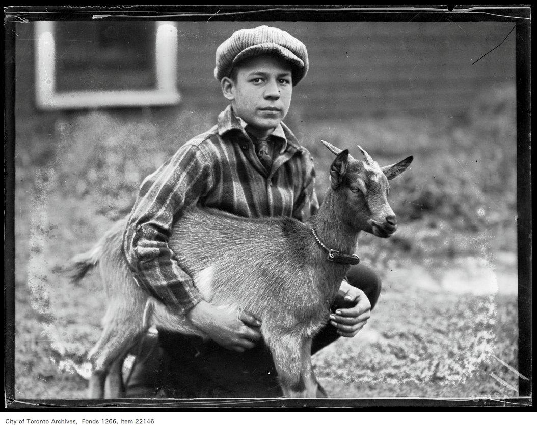 "Broadview Boys' [Fall] Fair, Nelson McDole, 165 First Avenue, goat ""Kiddo""."
