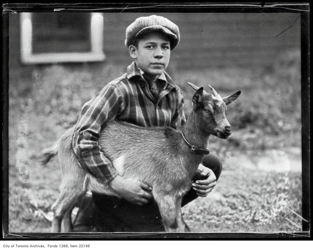 "Broadview Boys' [Fall] Fair, Nelson McDole, 165 First Avenue, goat ""Kiddo""."