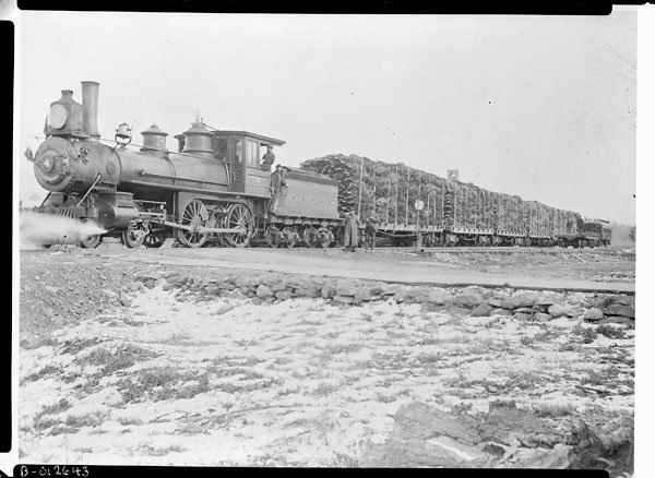 train-with-christmas-trees-n-d-library-and-archives-canada