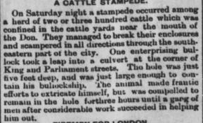 18830828GL Cattle stampede