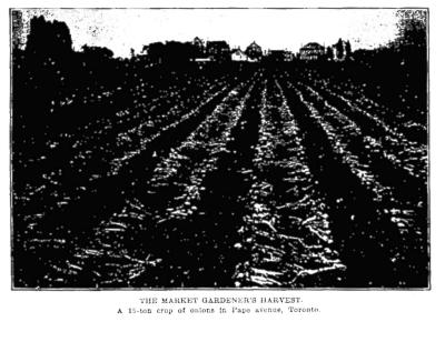 Globe, Oct. 26, 1912 Onions Pape Ave