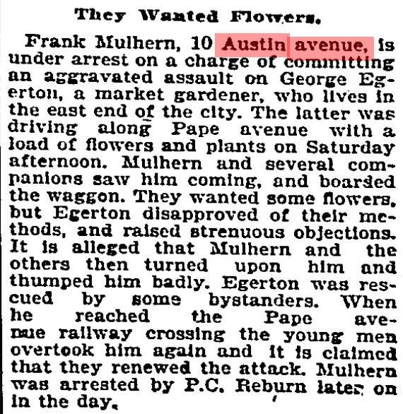 10 19000910 GL Mulhearn Austin Avenue roughed up flower grower