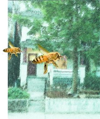 Bees on AUstin2