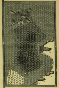 R Wilkin, Handbook in Bee Culture, 1871