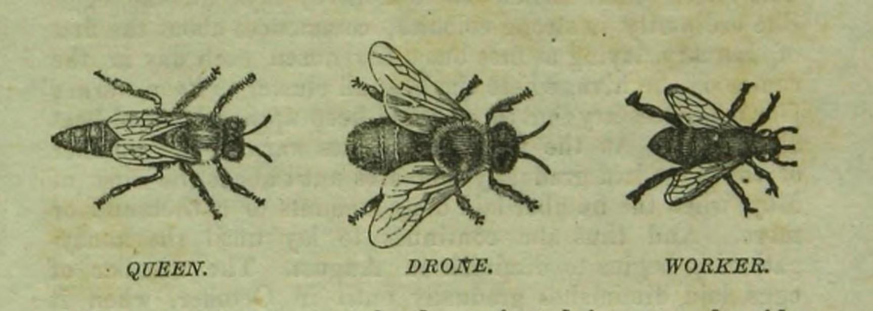 R Wilkin, Handbook in Bee Culture, 1871a